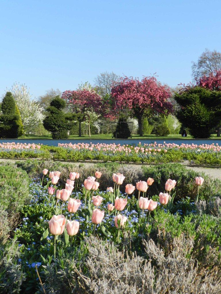 Blooms in Battersea park