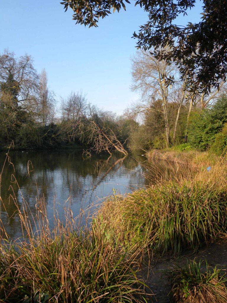 Duck Pond - Battersea Park