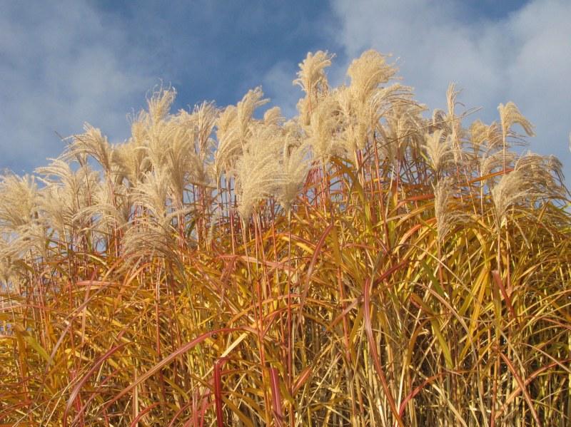 London_grasses-1-2 Kew