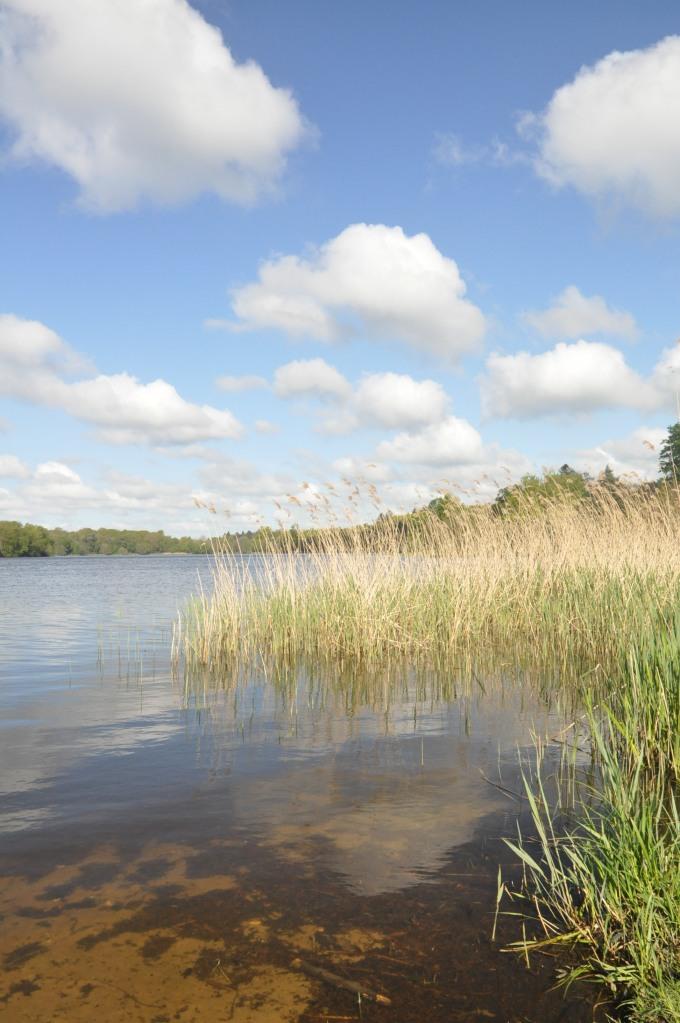 London_grasses-10 - Virginia Water