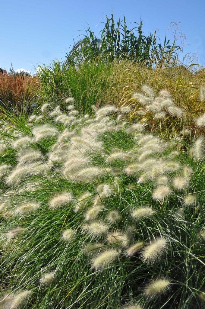 London_grasses-11