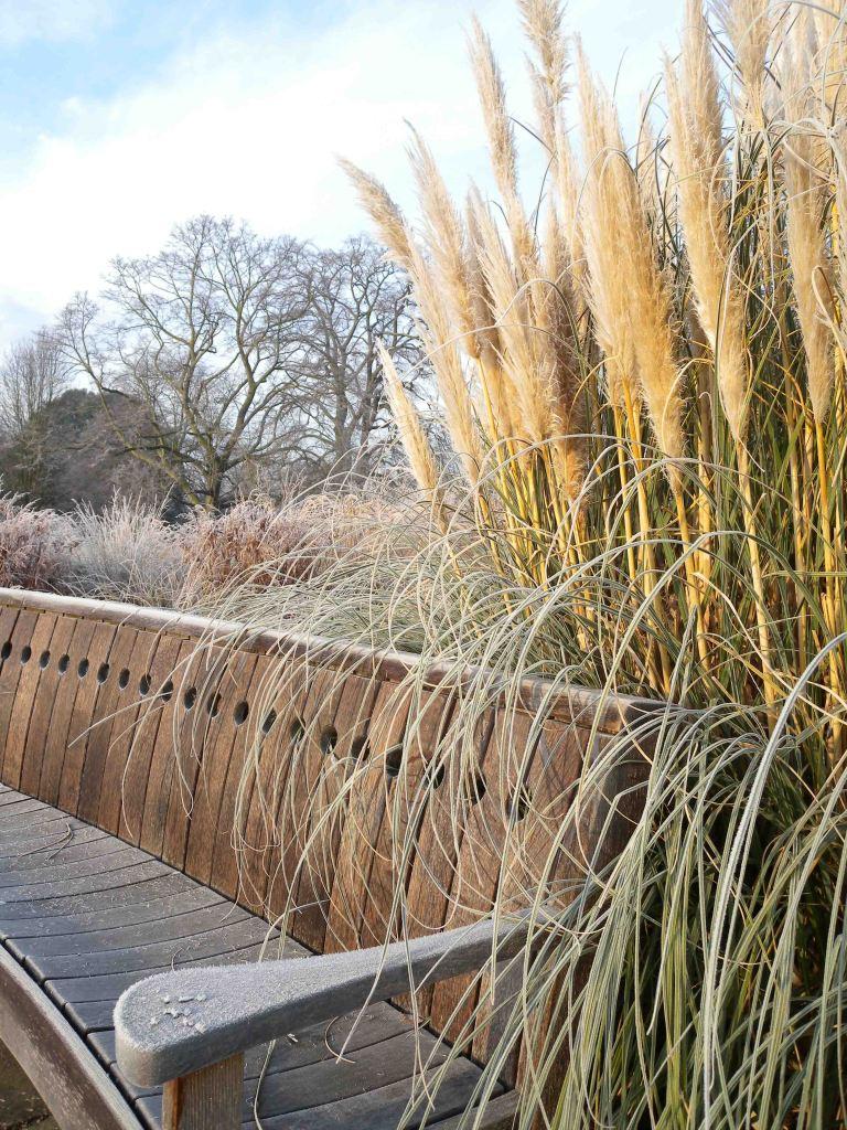London_grasses-2-2 Kew