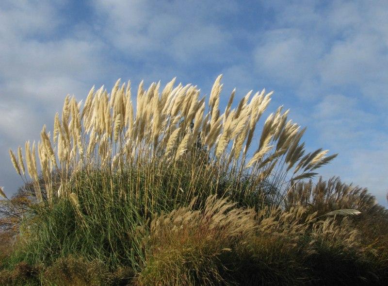 London_grasses-2 Kew