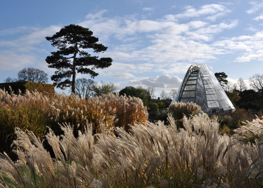 London_grasses-3 Alpine garden