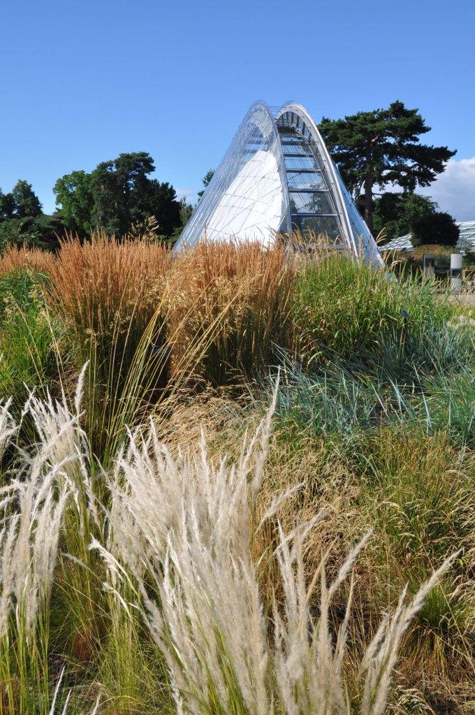 London_grasses-9 Alpine garden