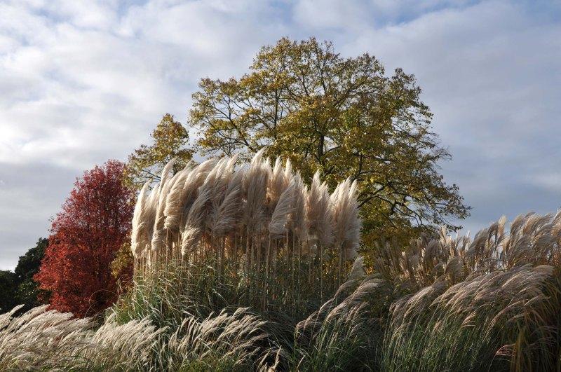 London_grasses-4 Kew