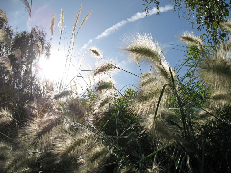 London_grasses-7 Kew