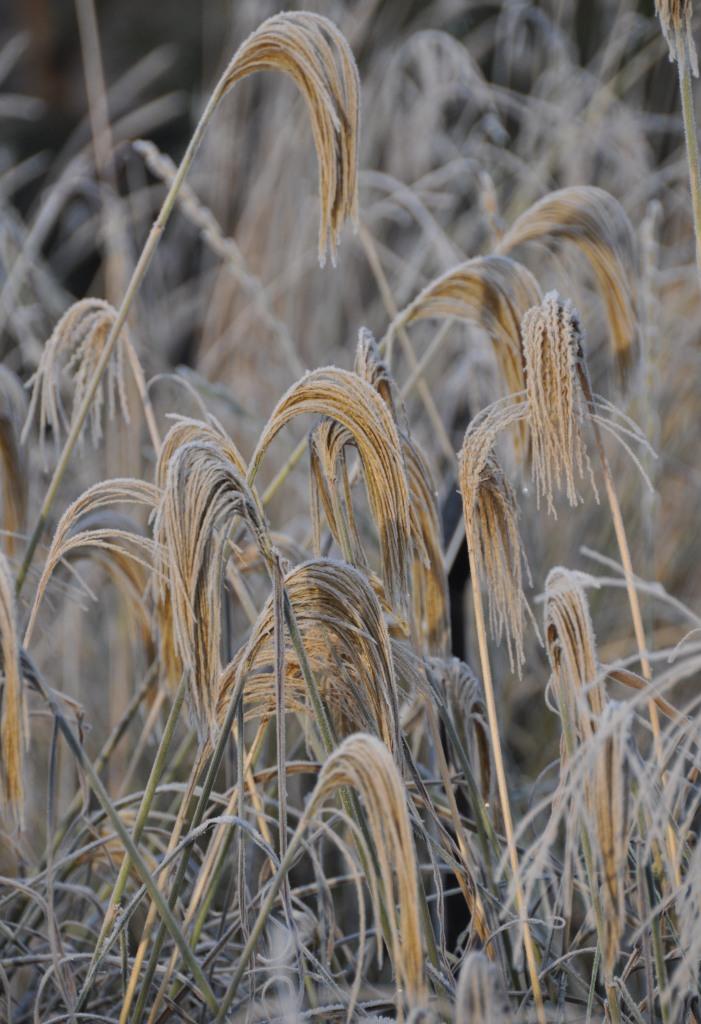 London_grasses-8 Winter Kew