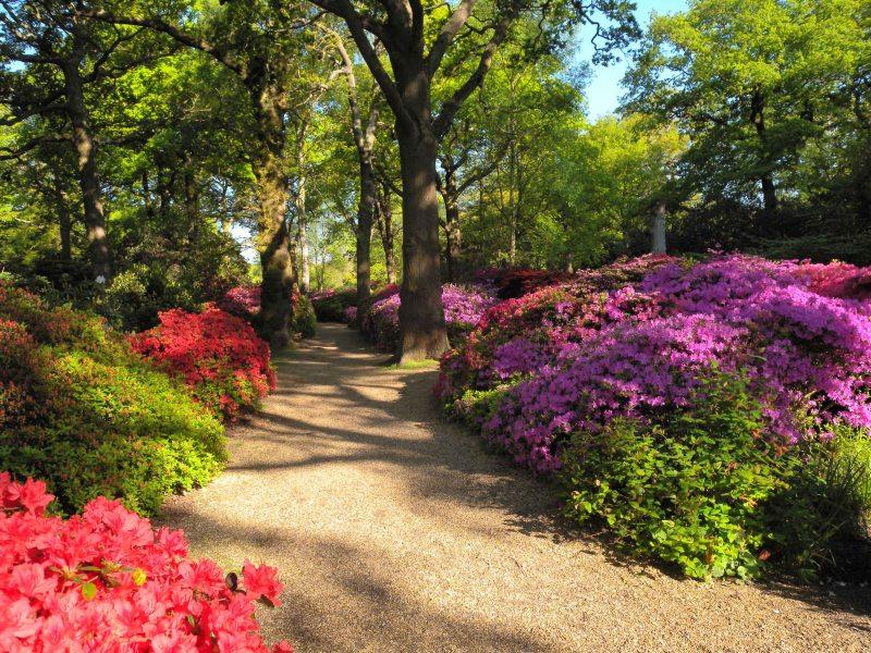 Spring - Richmond Park
