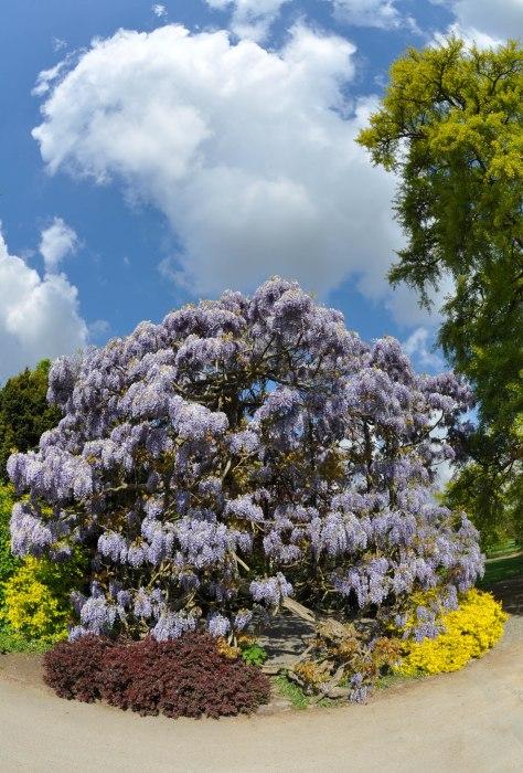 spring - Kew Gardens