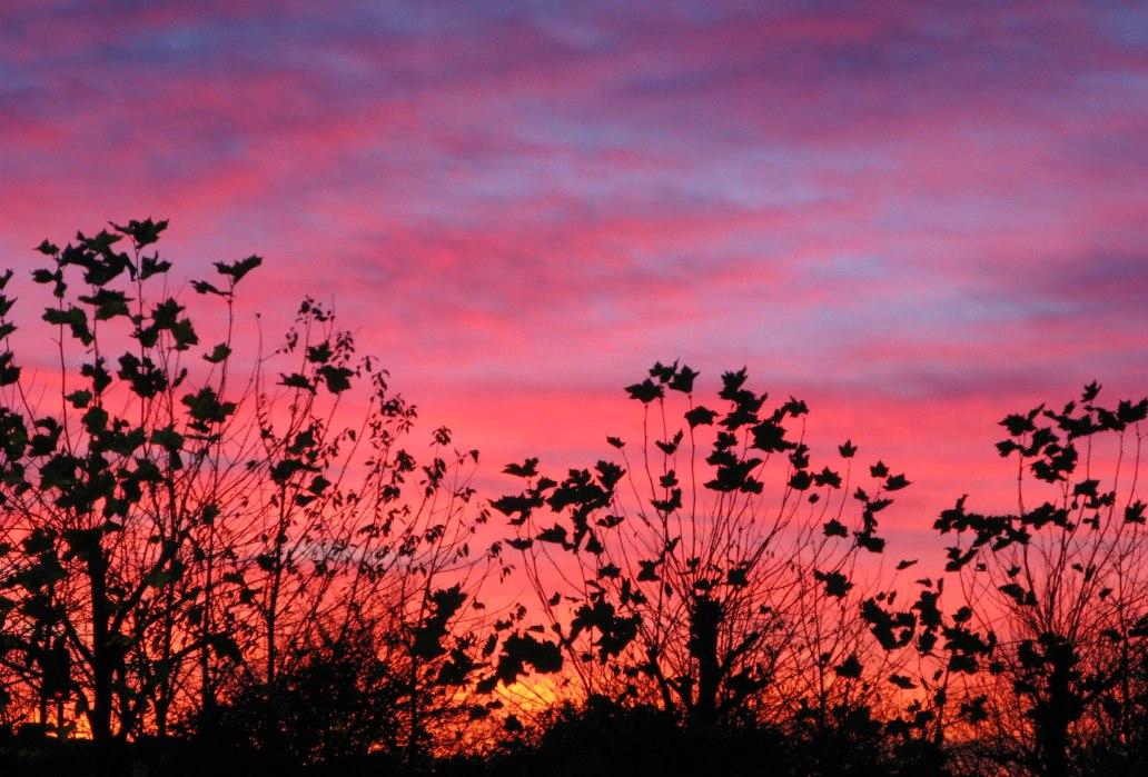 Morning - Hedge - Late Autumn