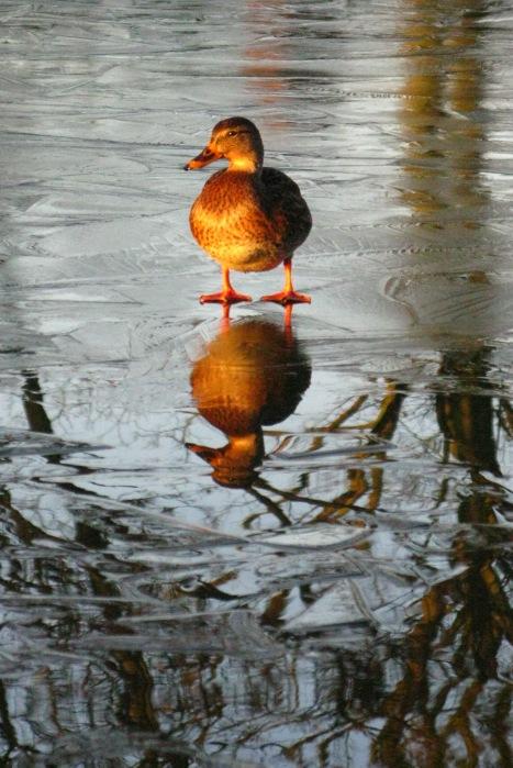 Winter - Duckpond