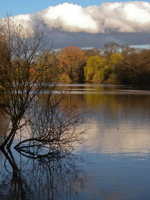 Autumn - Trent park