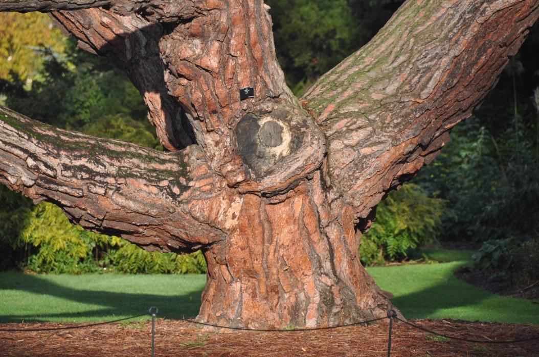 Kew - tree bark view