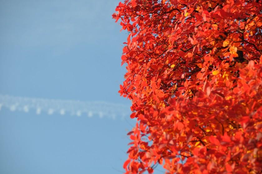 Autumn Tree detail