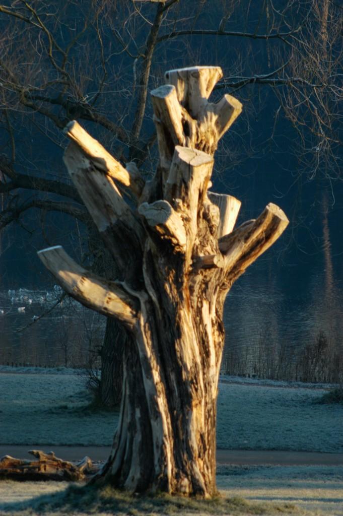 Winter Dead Tree- Hampstead Heath