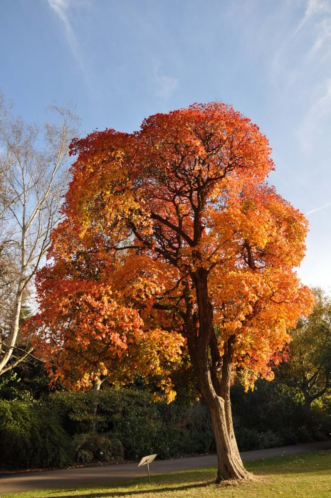 Autumn Colour - Kew