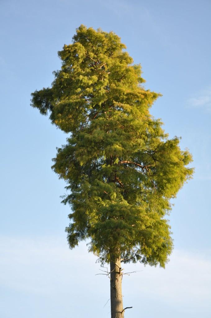 Tree Top - Kew