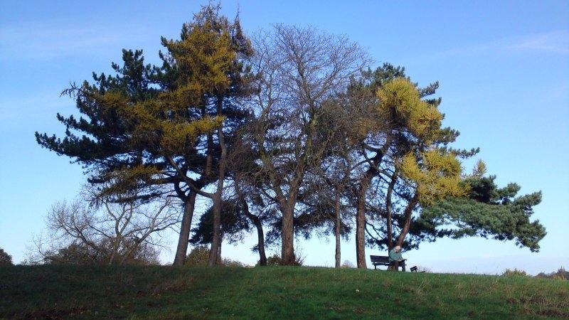 Hampstead Heath - Hilltop trees