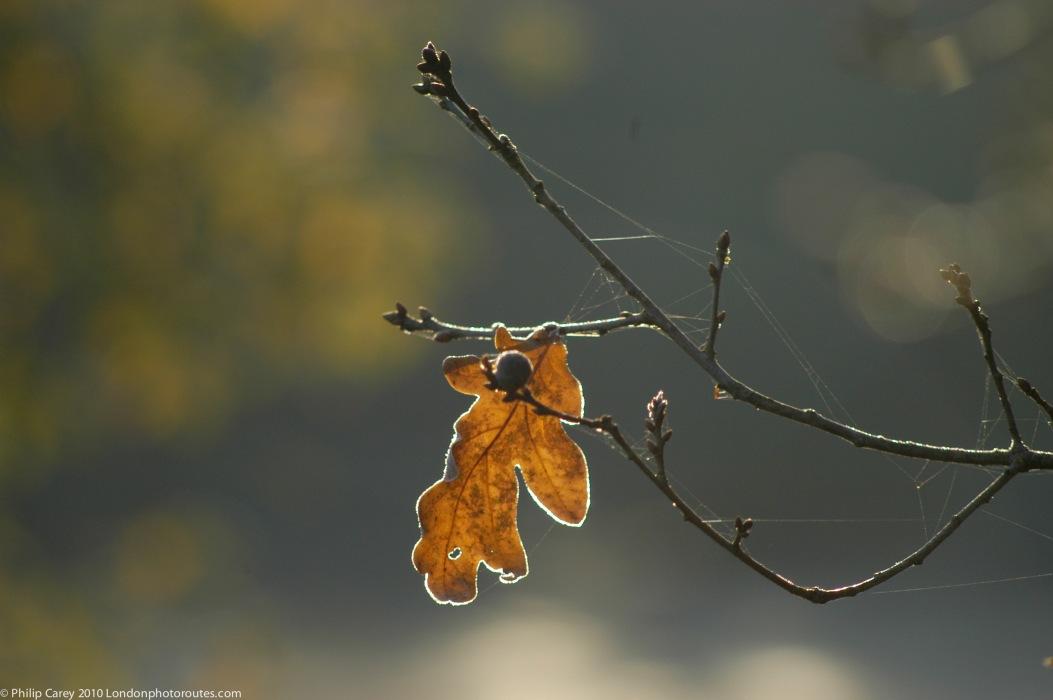 FEW - Single leaf by Boating pond - regents park