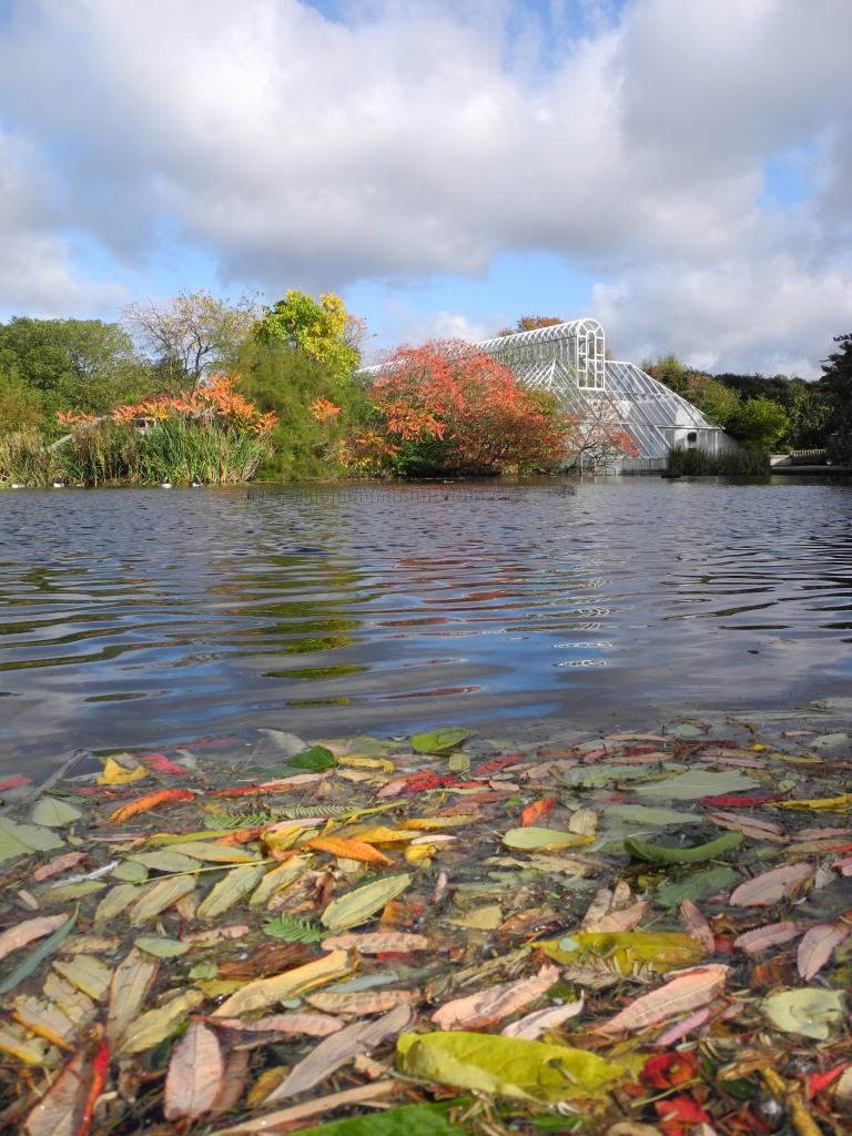 Autumn leaves on Pond - Kew Gardens