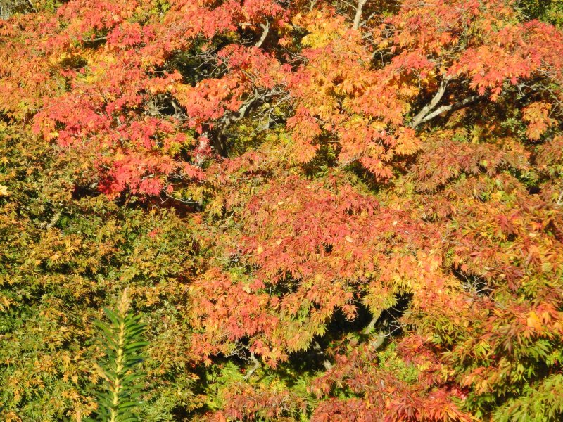 Autumn Colours - RHS Wisley