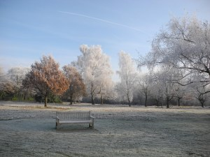 Hadley Common Wood 1