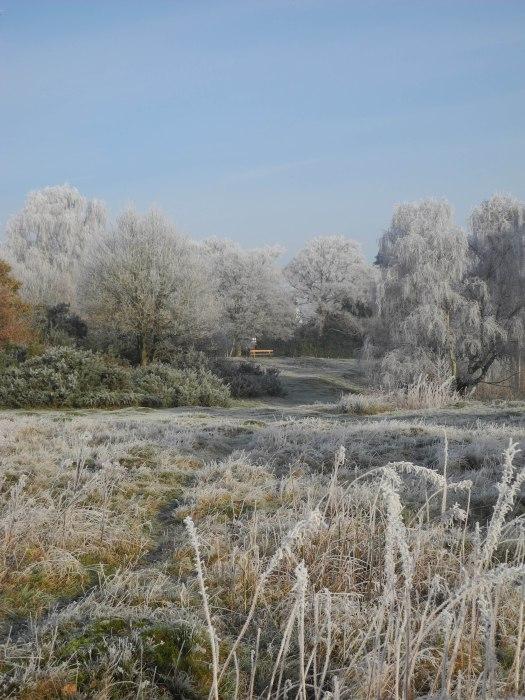 Hadley Common Wood 2
