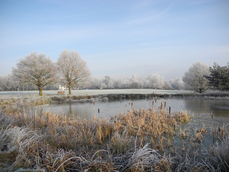 Hadley Common Wood 3